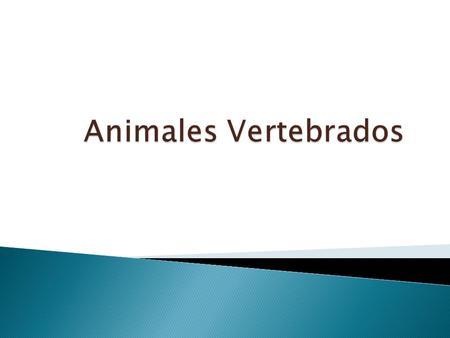 Animales Vertebrados.