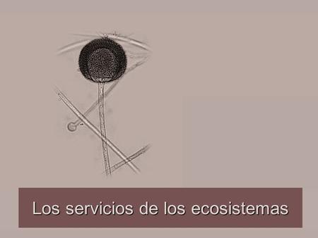 Los servicios de los ecosistemas. La Economía y la Ecología Ambas disciplinas comparten algunas características teóricas y en diversos momentos cada una.