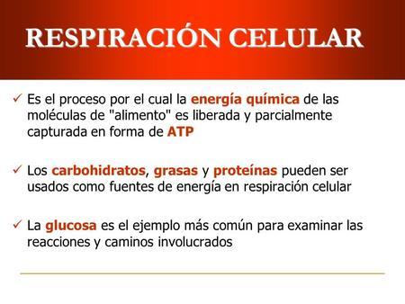 RESPIRACIÓN CELULAR Es el proceso por el cual la energía química de las moléculas de alimento es liberada y parcialmente capturada en forma de ATP Los.