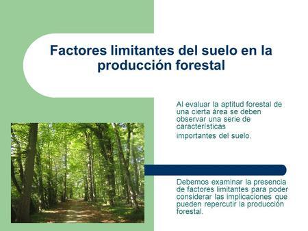 Factores limitantes del suelo en la producción forestal Al evaluar la aptitud forestal de una cierta área se deben observar una serie de características.