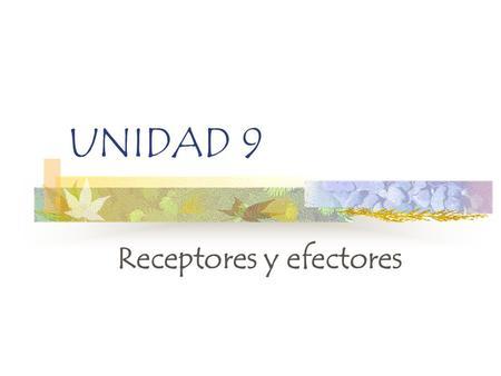 UNIDAD 9 Receptores y efectores. Sistema sensorial Aparato locomotor Sistema endocrino Sistema nervioso Recepción de información por los órganos de los.