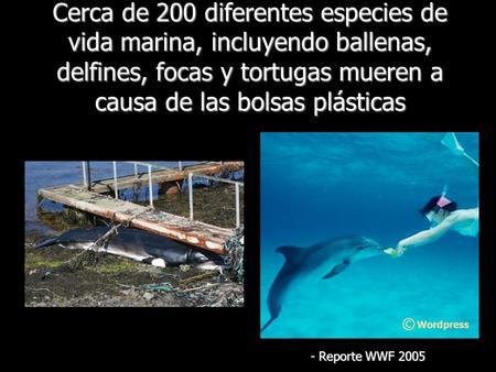 Cerca de 200 diferentes especies de vida marina, incluyendo ballenas, delfines, focas y tortugas mueren a causa de las bolsas plásticas - Reporte WWF 2005.