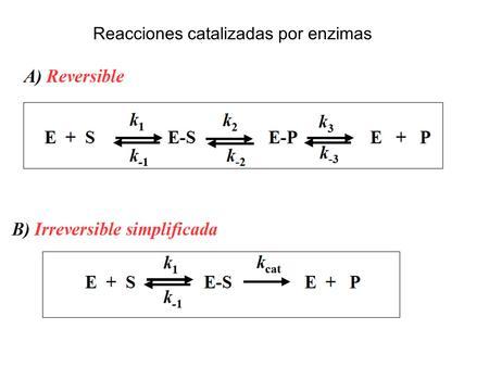 Reacciones catalizadas por enzimas