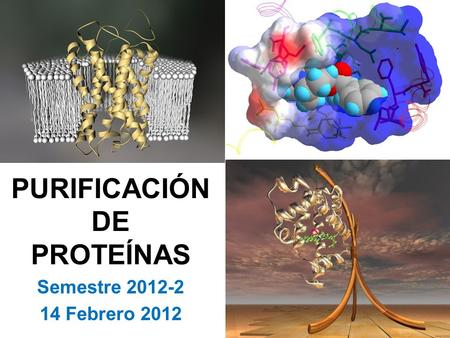 PURIFICACIÓN DE PROTEÍNAS Semestre 2012-2 14 Febrero 2012.