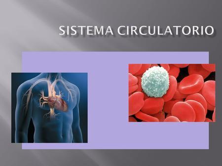 Transporte: Nutrientes Gases respiratorios (O 2 - CO 2 ) Desechos metabólicos Hormonas Anticuerpos Evitar hemorragias (coagulación sanguínea) Regulación.