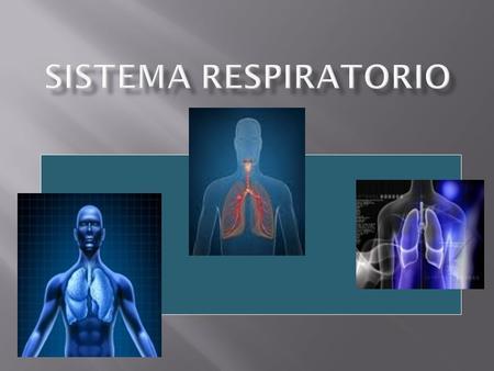 El término respiración se utiliza para indicar dos procesos diferentes: - Respiración externa: respiración pulmonar, proceso físico de ventilación pulmonar.