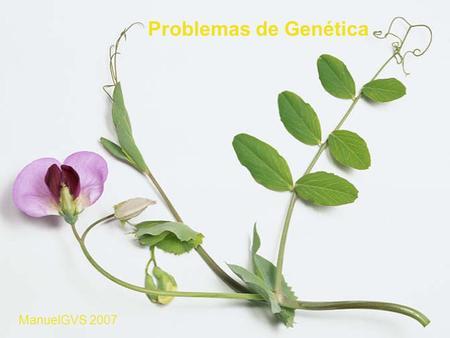 Problemas de Genética ManuelGVS 2007.