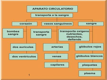 1 1 2 2 3 3 4 4 5 5 6 6 7 7 8 8 9 9 10 APARATO CIRCULATORIO OXÍGENO A CÉLULAS RECOGER DIÓXIDO DE CARBONO NUTRICIÓN A ÓRGANOS Y TEJIDOS ARRASTRAR.