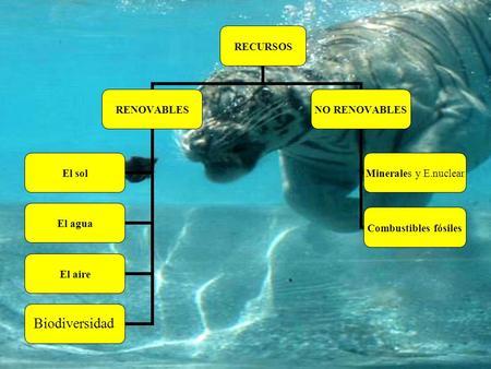 RECURSOS RENOVABLES El solEl aguaEl aireAnimales y plantas NO RENOVABLES Combustibles fósiles Minerales y E.nuclear Biodiversidad.